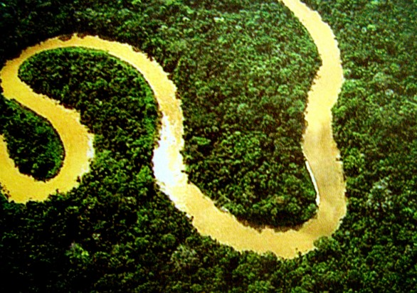 Floresta AmazônicaFoto por: lubasi