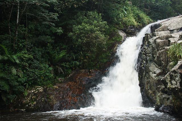 Mata Atlântica - Paraná