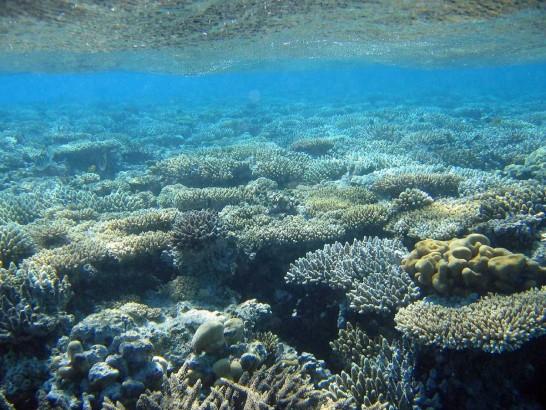 Coral de água doce