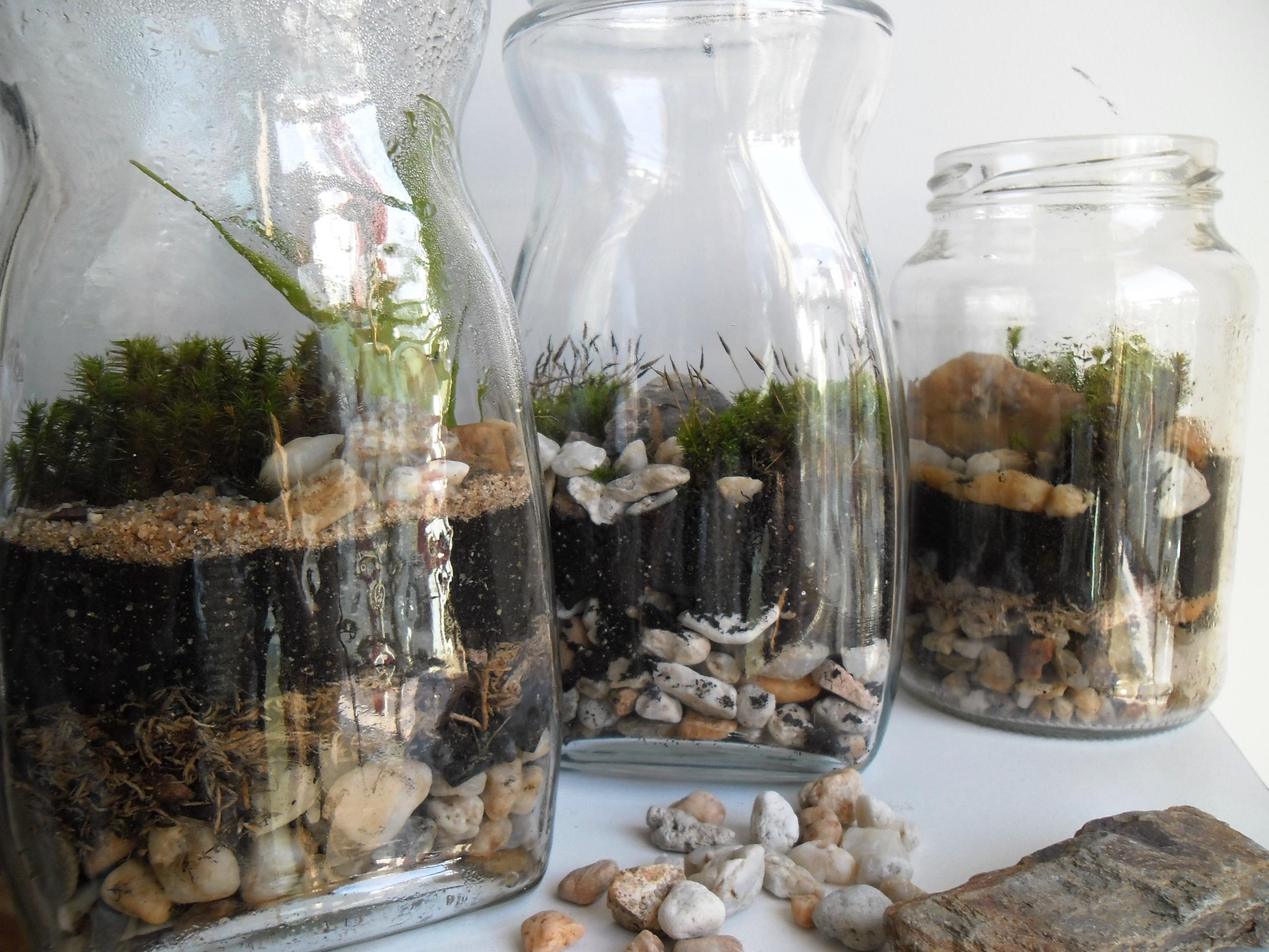 Aprenda como fazer um jardim em vidros de conserva  Pensamento Verde