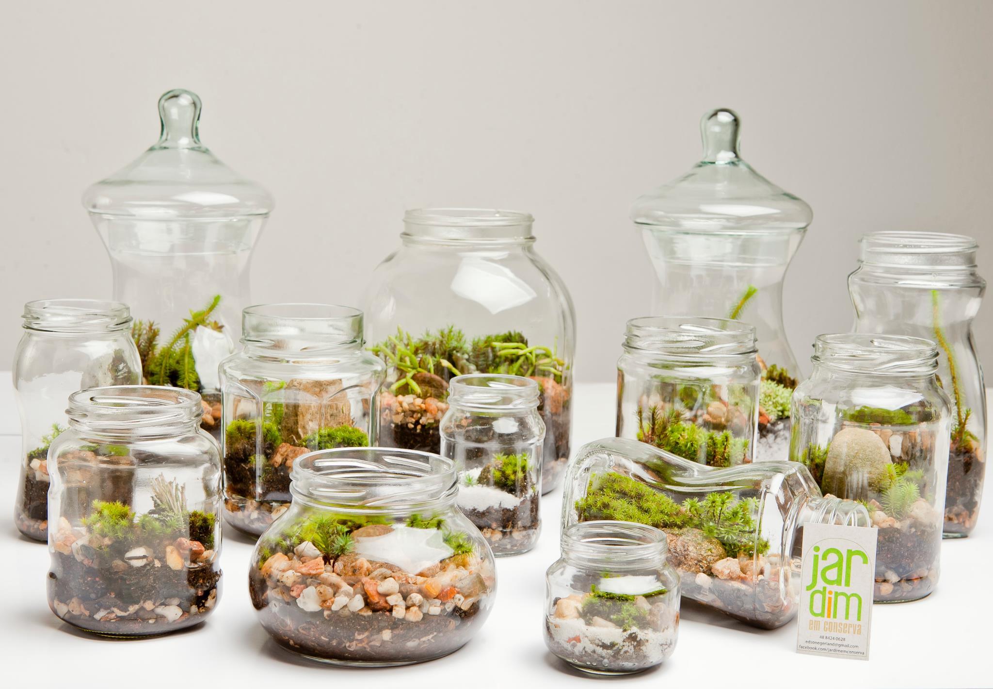 mini jardins em vidro : mini jardins em vidro:Terrarium Ideas Pinterest
