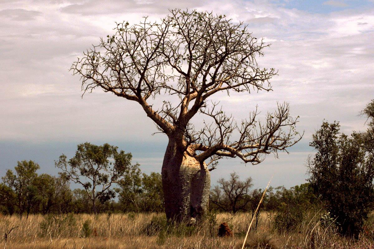 Semi-árido na Austrália