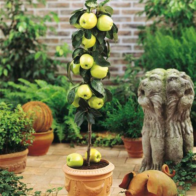 Fabuloso Aprenda a cultivar árvores frutíferas em vasos - Pensamento Verde WM41