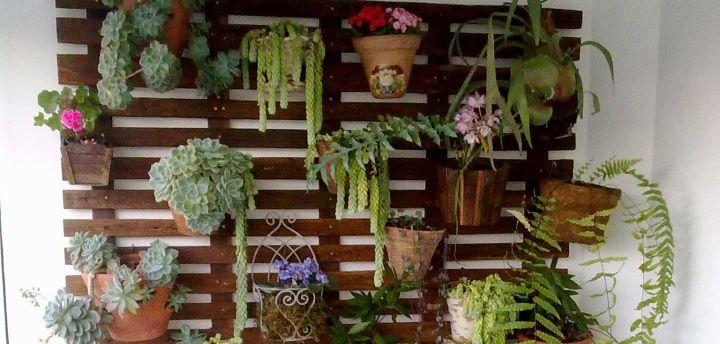 Passo a Passo Aprenda a fazer um jardim suspenso  Pensamento Verde