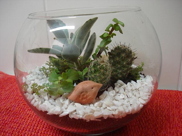 mini jardim terrario : mini jardim terrario:Passo a passo de como fazer um terrário – Pensamento Verde
