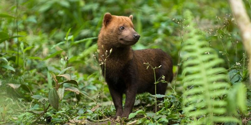 Famosos Quais são os animais em extinção no cerrado? - Pensamento Verde LF71