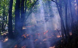 Queimada na floresta