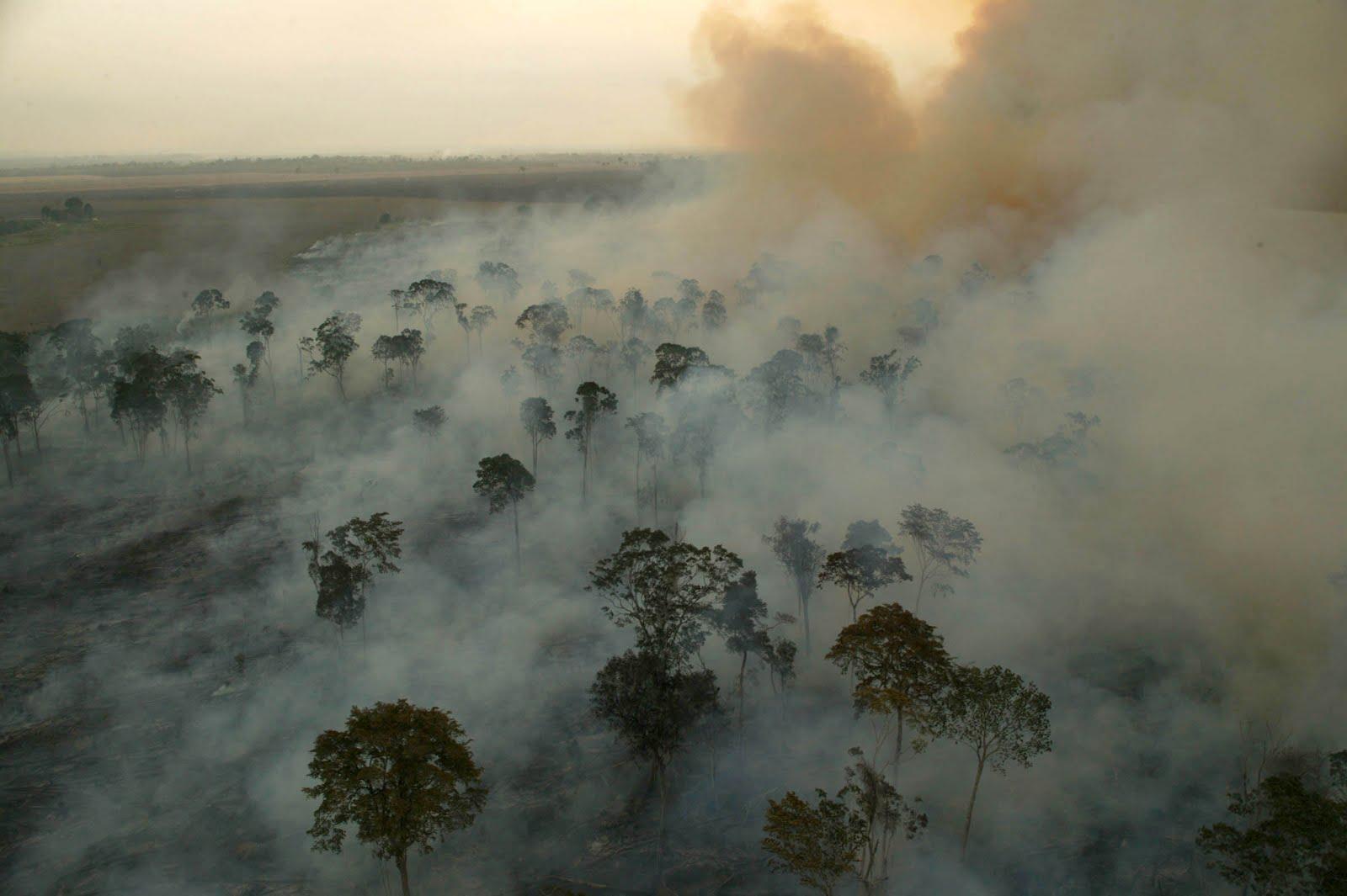 Resultado de imagem para queimadas na amazonia