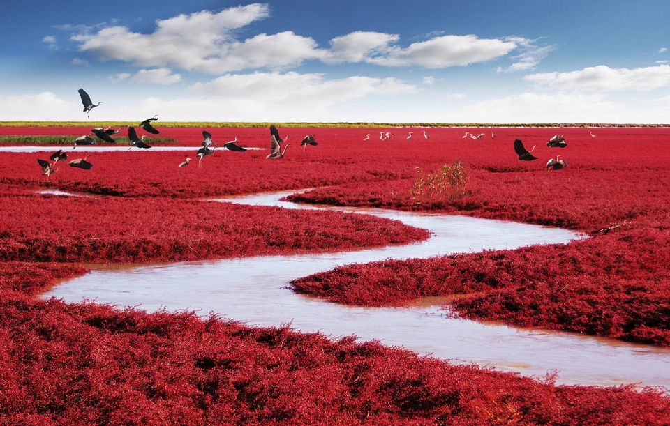 Red Seabeach, China