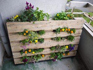 Passo a Passo: Saiba como fazer um jardim vertical com pallets ...