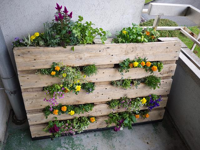 Passo a Passo Saiba como fazer um jardim vertical com pallets Passo a