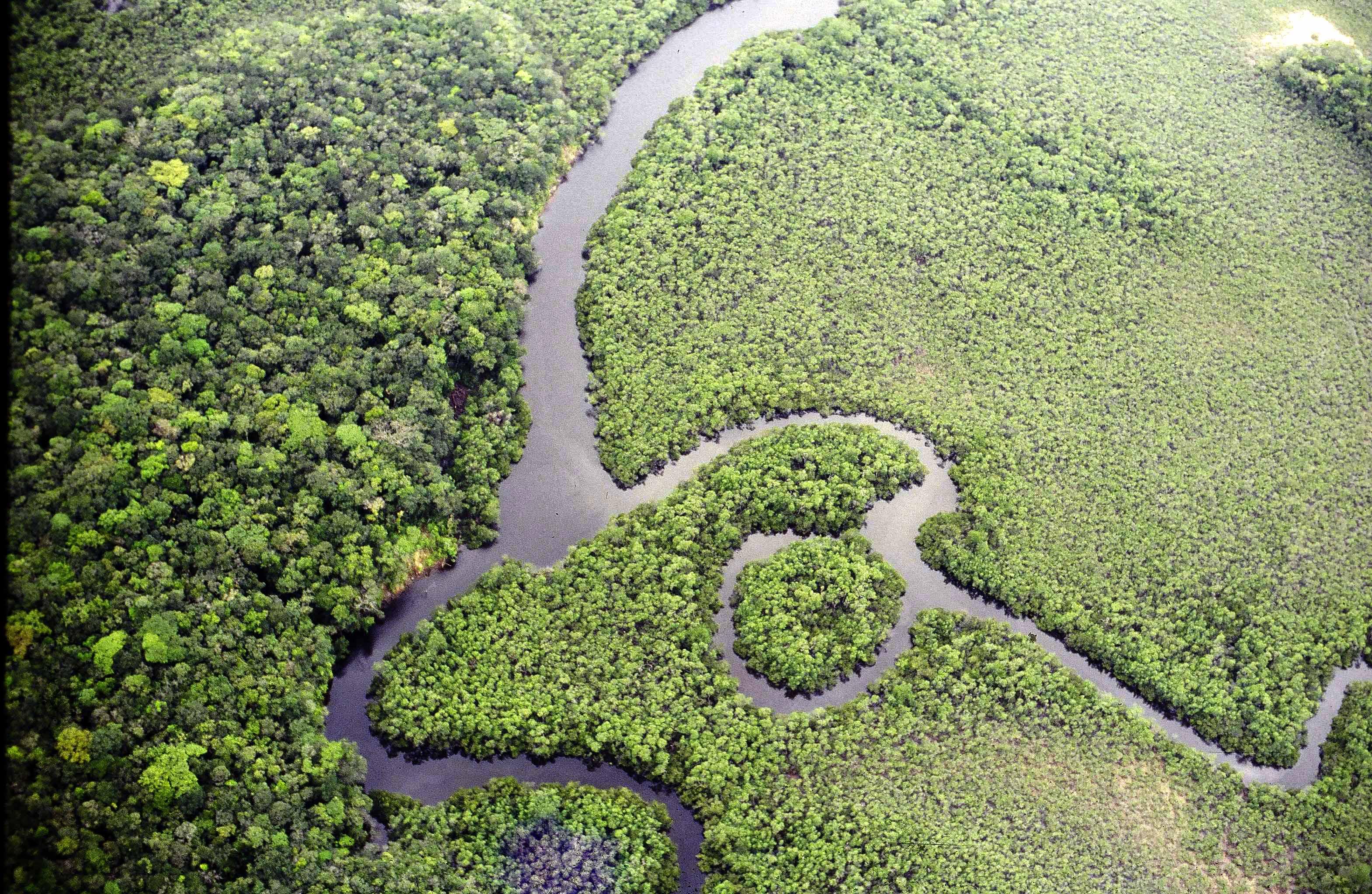Reserva ecológica Alto Maués.