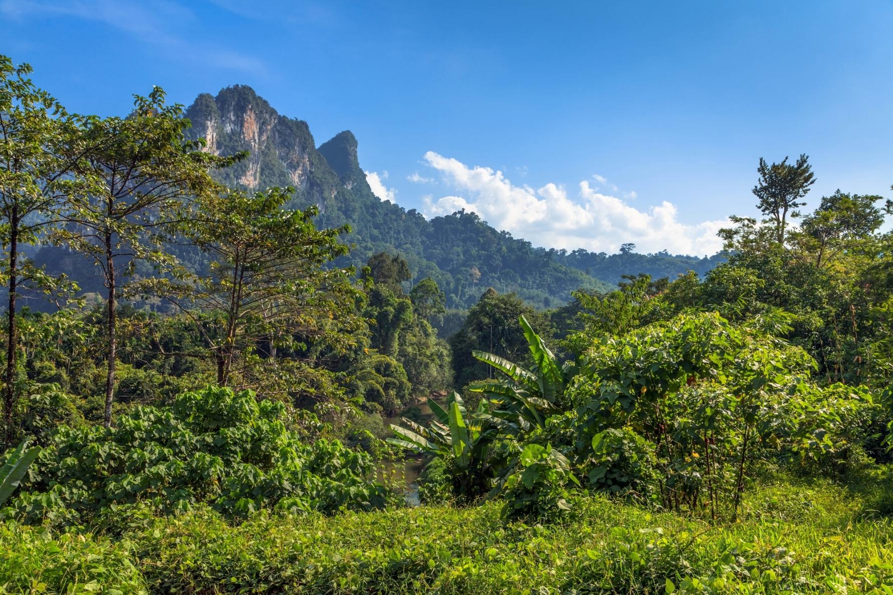 O objetivo principal das ARIEs é preservar os ecossistemas para as futuras gerações locais.