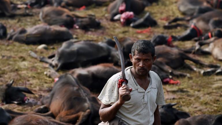 Quase 250 mil animais foram decapitados ou degolados na edição anterior do festival, em 2009.
