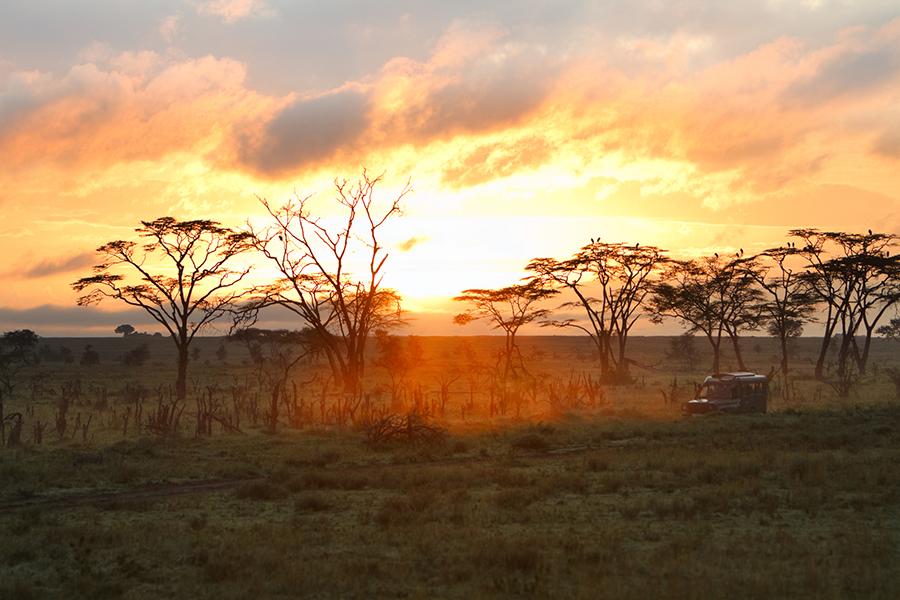 Loba Das Estepes: Como é O Clima Na Savana Africana?