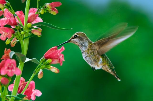 Foto de beija flor na flor