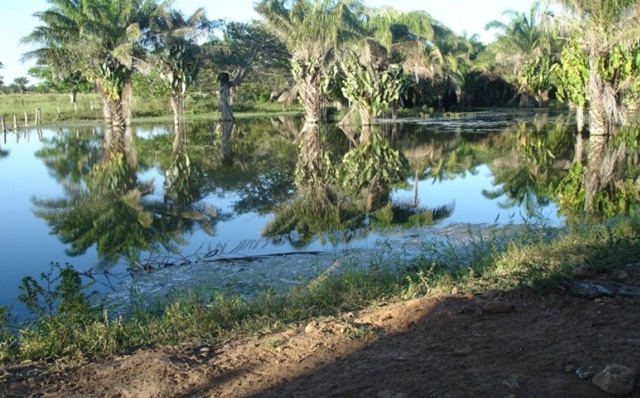 Munic pio do pantanal inicia projeto para recuperar for Recuperar agua piscina verde
