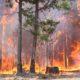 foto de floresta pegando fogo
