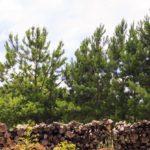 Afinal, quantas árvores são necessárias para produzir uma folha de papel?
