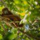 foto de macaco em cima da árvore