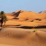 Conheça as principais espécies de plantas do deserto e suas características