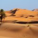 foto de deserto com planta