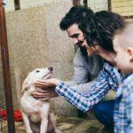 Adoção de animais: conheça as regras do processo e saiba como adotar um!