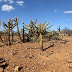 Desertificação no Nordeste: causas, principais problemas e como controlá-lo