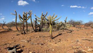 foto de desertificação no Nordeste