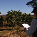 Com foco no plantio de mogno, investimento na atividade reduz exploração de florestas nativas