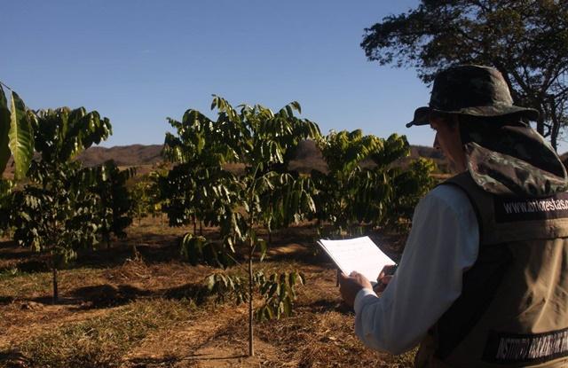 foto de homem olhando plantação de árvores