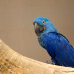 Conheça 4 animais exclusivos do território brasileiro