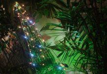 foto de árvore de natal feita de garrafa