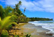 foto de praia com vegetação