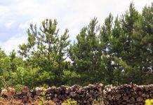 foto de árvores cortadas