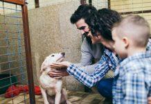 foto de família adotando cachorro