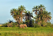 animais da savana africana