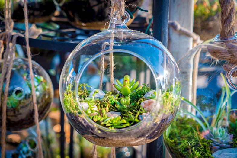 cactos em vasos de vidro
